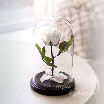 Белая роза в колбе Premium 26 см