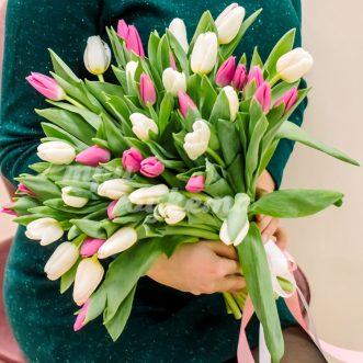41 розовый и белый тюльпан